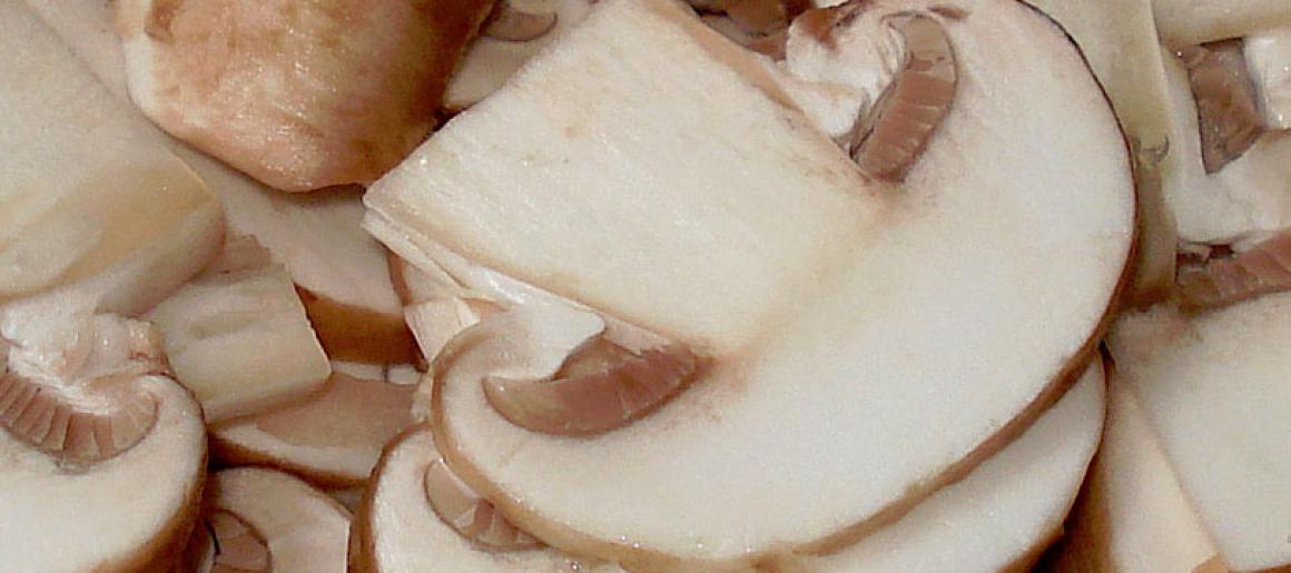 champignons-1.jpg