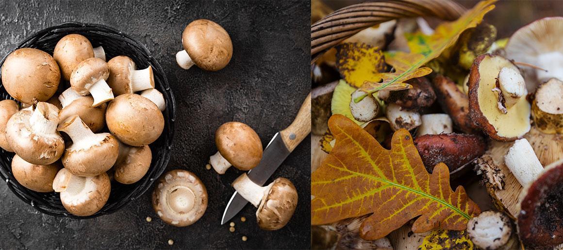 A l'automne, cuisinez avec une farandole de champignons !